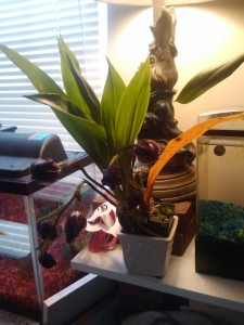 Bolo (yes, that is his name) waiting to bloom