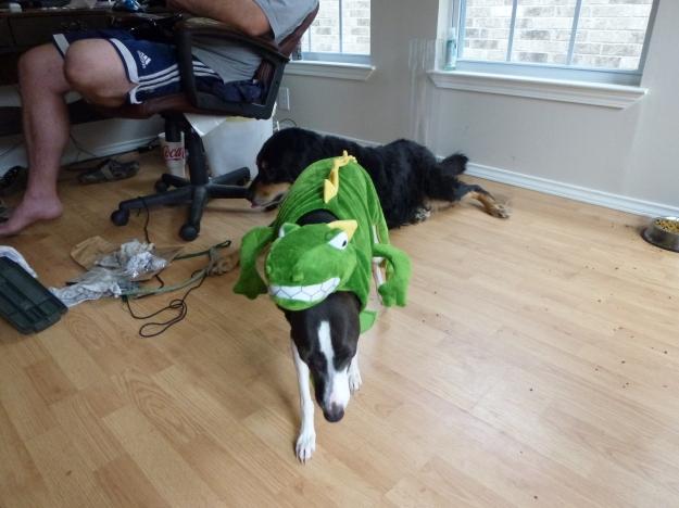Italian Greyhound Halloween dinosaur costume