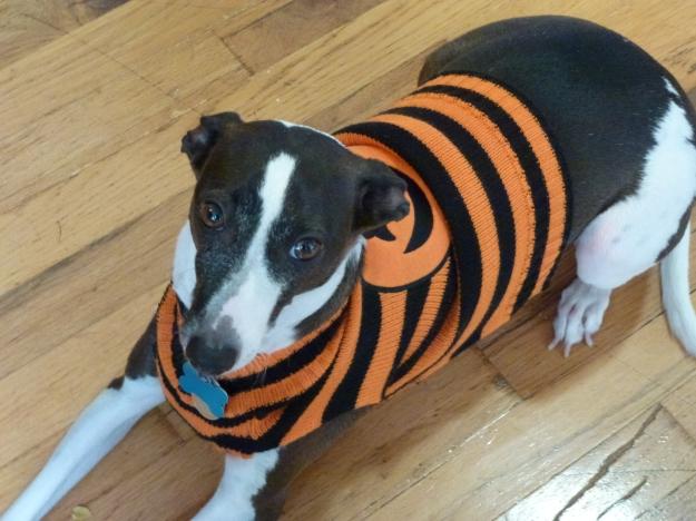 Halloween Walter