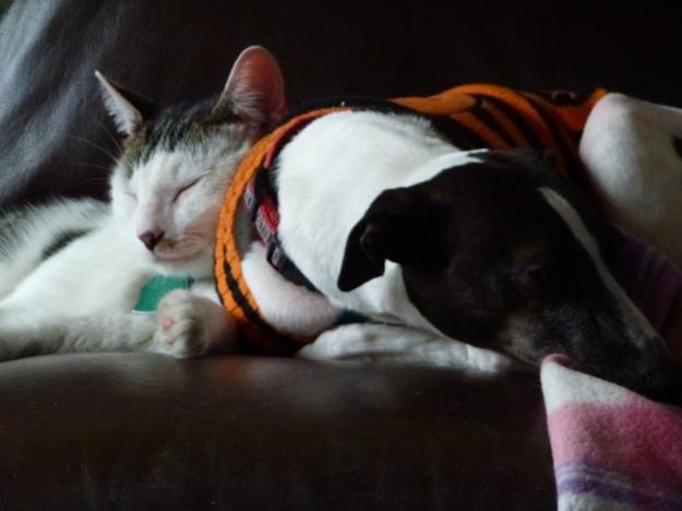 Walter snuggling Robert